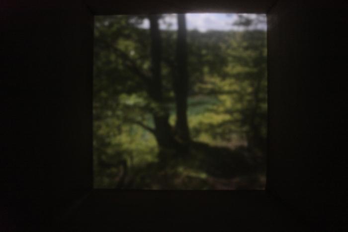 Wald am Königsee, Eifel | 2012 | Camera Obscura | Pigmentdruck auf Alu-Dibond | 150 x 200 cm