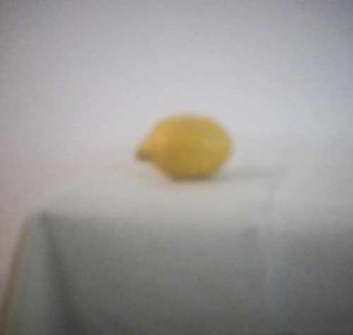 Zitrone | 2019 | Camera Obscura | Pigmentdruck auf Alu-Dibond